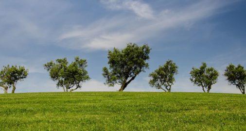 applicazione del contributo ambientale