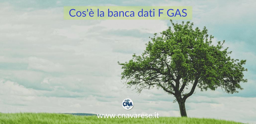 Cos'è la banca dati F GAS